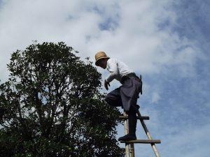 pruning pole saw