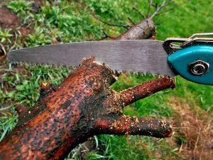 hand pole saw
